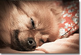 Compassionate Veterinary Care In-Home Euthanasia