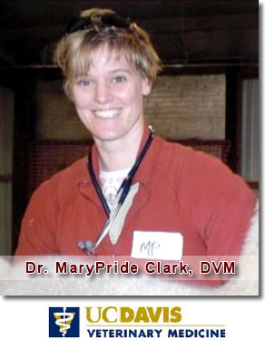 Dr. MaryPride Clark, DVM - Compassionate Veterinary Care